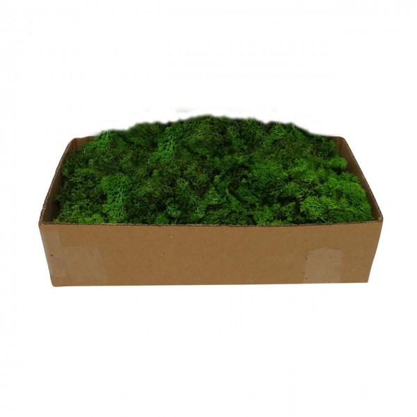 Rentier Moos, grün 500gr